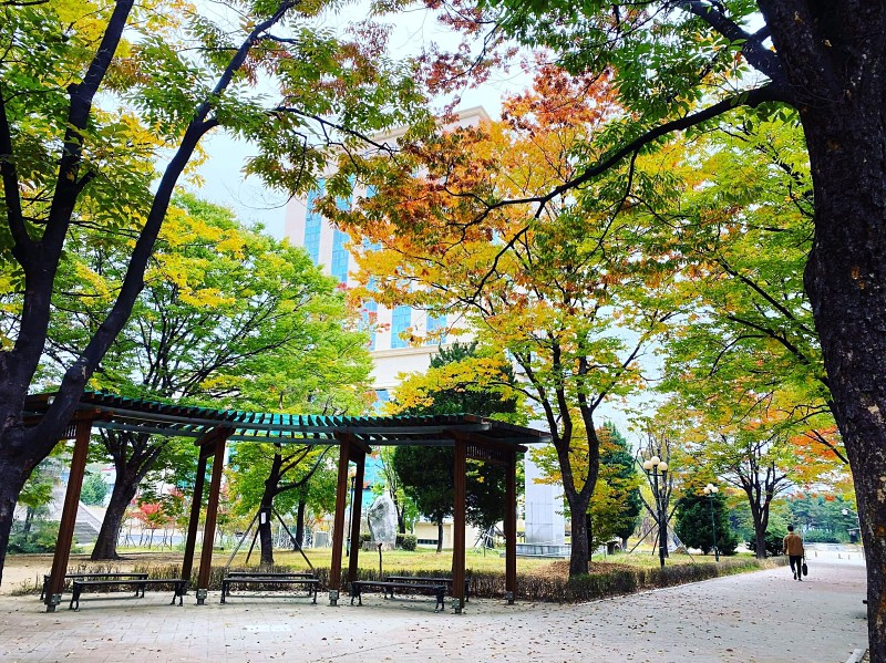 Chương trình đào tạo hệ Đại học tại trường Đại học Sejong